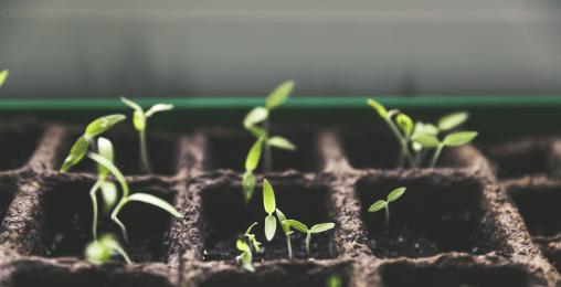 健康野菜の育て方インストラクター