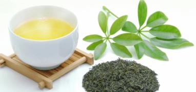 日本茶セレクター認定試験