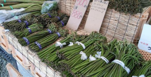 山菜採り・山菜の販売
